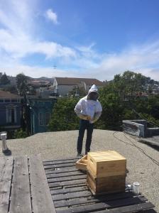bee hiving #2